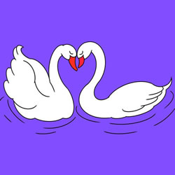 How to Draw Swans in Love Step by Step