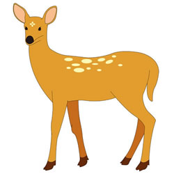 How to Draw a Sika Deer Step by Step