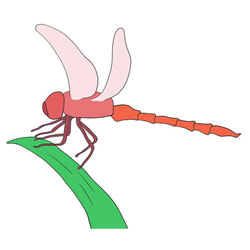 How to Draw a Dragonfly on Leaf Step by Step