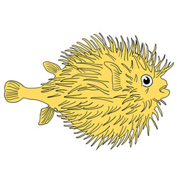 How to Draw a Pufferfish Step by Step