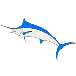 How to Draw a Blue Marlin Step by Step