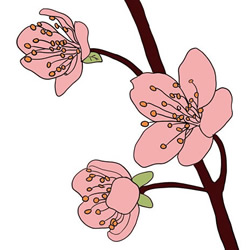 How to Draw Plum Blossoms