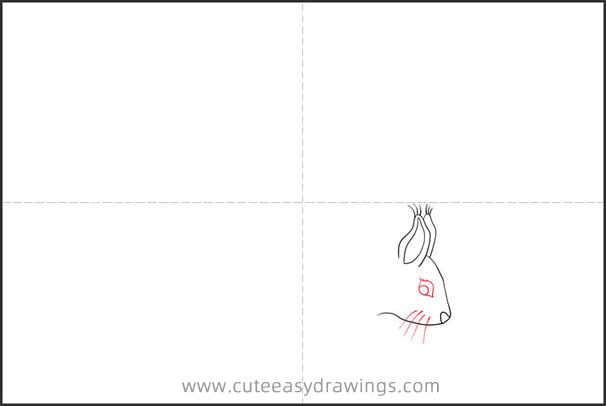 How to Draw a Squirrel
