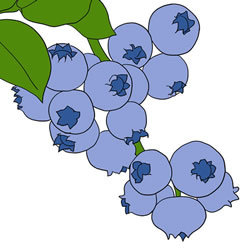 How to Draw Blueberries on the Tree