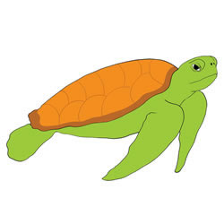 How to Draw a Big Sea Turtle