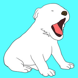 How to Draw a White Puppy