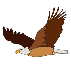 How to Draw an Eagle Flying Easy