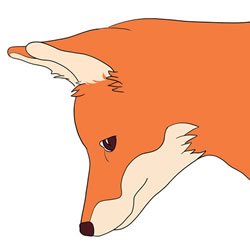 How to Draw a Fox Head