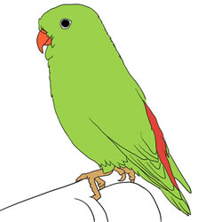 How to Draw a Green Parrot