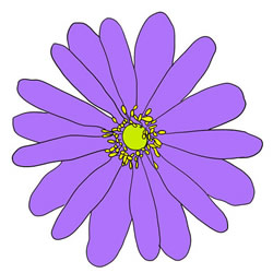 How to Draw an Anemone Flower