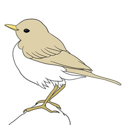 How to Draw a Pipit on a Rock