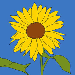 How to Draw a Sunflower Realistic