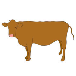 How to Draw Yellow Cattle