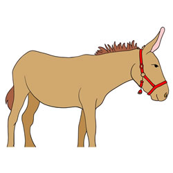 How to Draw a Mule Standing