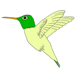 How to Draw a Hummingbird Flying