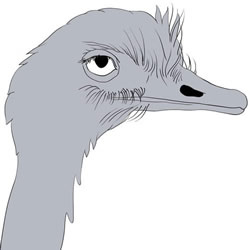 How to Draw a Realistic Ostrich Head