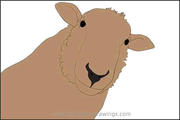 How to Draw a Realistic Sheep Head