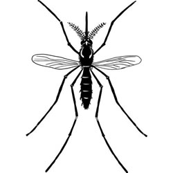 How to Draw a Realistic Mosquito
