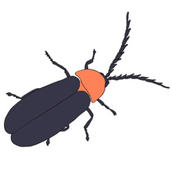 How to Draw a Realistic Firefly