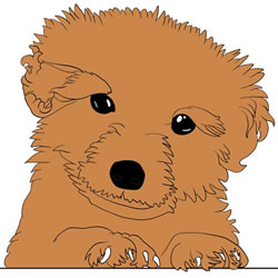 How to Draw a Realistic Teddy Bear Puppy