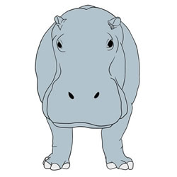 How to Draw the Front of a Hippo