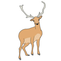 How to Draw a Stag Standing