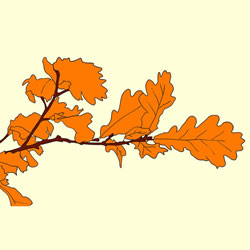 How to Draw Oak Leaves in Autumn