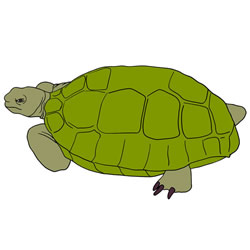 How to Draw a Realistic Old Turtle
