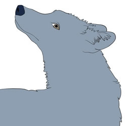 How to Draw a Wolf Looking Back