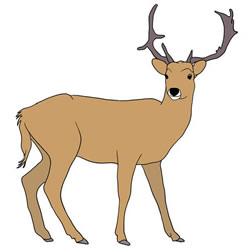 How to Draw a Realistic Roe Deer