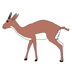 How to Draw a Gazelle Standing