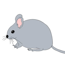 How to Draw a Realistic Mouse