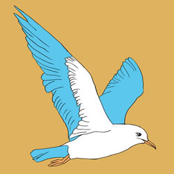How to Draw a Realistic Seagull