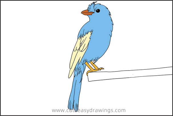 How to Draw a Robin Bird Resting