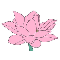How to Draw a Realistic Lotus