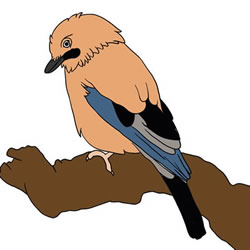 How to Draw a Jay on a Branch