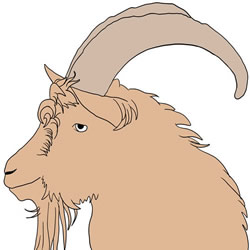 How to Draw a Billy Goat Head