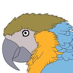 How to Draw a Realistic Parrot Head