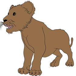 How to Draw a Realistic Lion Cub