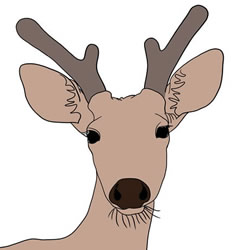 How to Draw a Stag Head