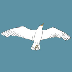 How to Draw a Seagull in the Sky