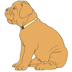 How to Draw a Realistic Bulldog